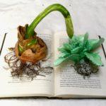 Books - Body Thief