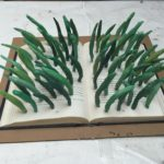 Books - Leaves of Grass